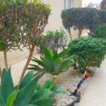 2 Complex garden