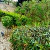 3 Complex garden 2 r